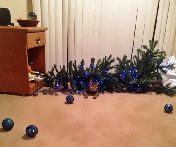 Gato destruye la Navidad