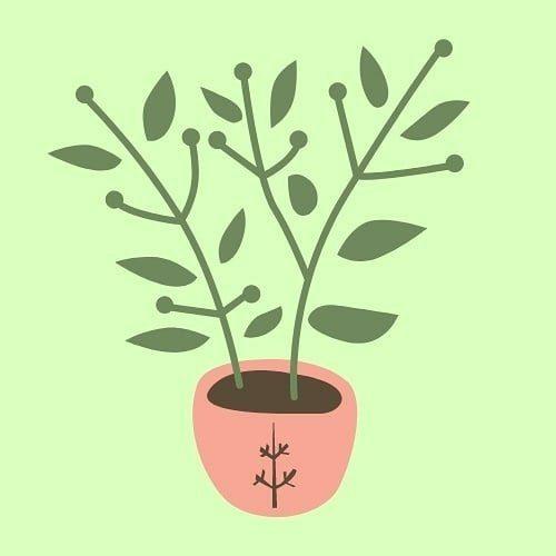 Vive Green 🌱Vida sostenible 🌍
